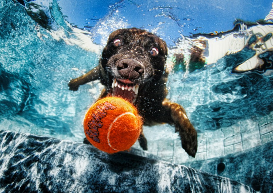 Seth-Casteel-Underwater-Dog-003