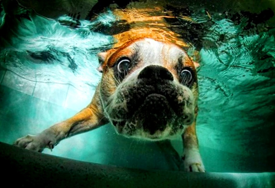 Underwater_Dogs_by_Seth_Casteel_17