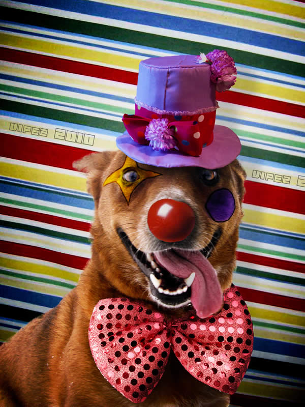 Happy Doggy Clown