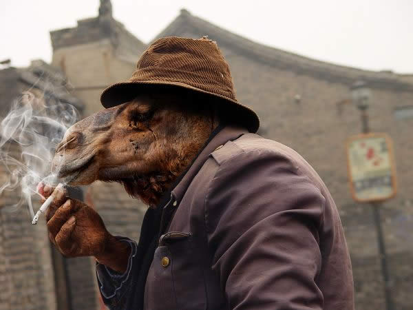 Smoking Camel