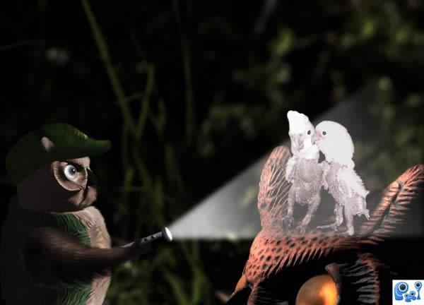 Featherless Encounter!