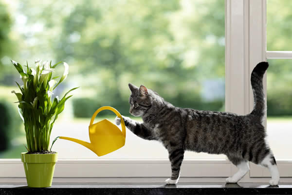 Cat Watering Flower