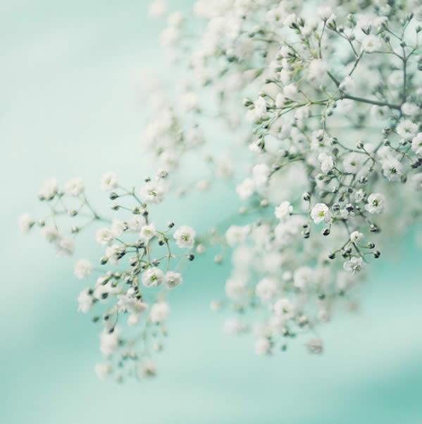 Joyful Simplicity