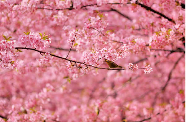 Pink Flowers and a Bird in Spring