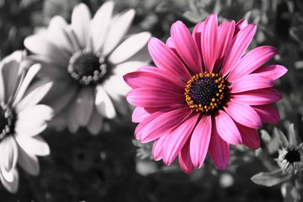 Flower - Selective Color