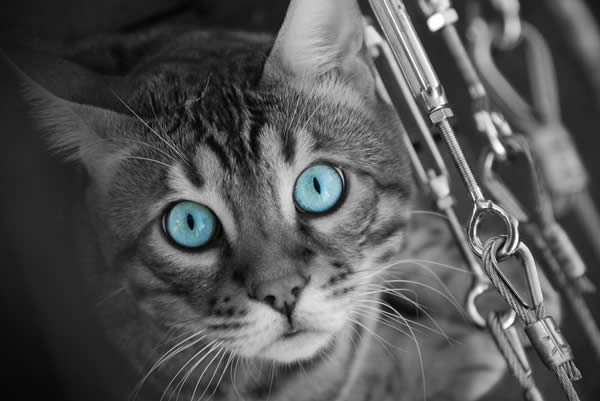 Tora Selective Colouring