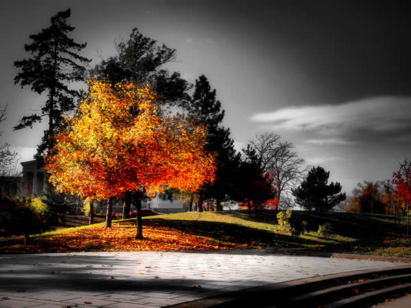 Fall: Selective Coloring