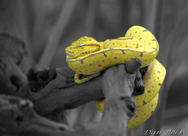 Chondro Selective Color