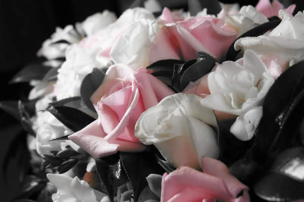 Selective Colour Flowers