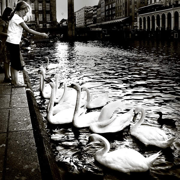 Feed my Heart to Swans
