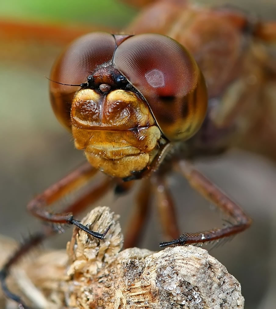 Insect Eyes - Detail