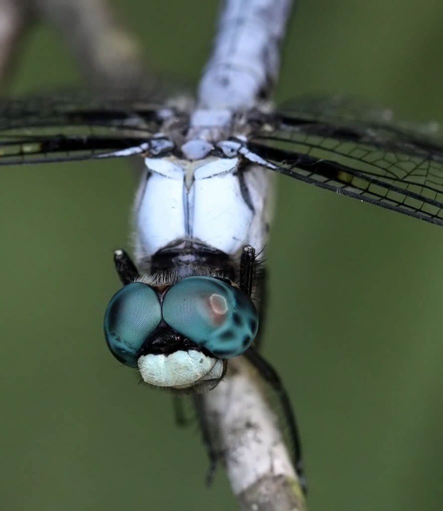 Azur Eyes