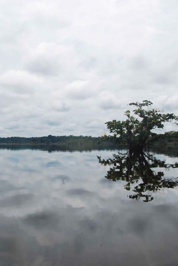 Cuyabeno Amazon Rainforest