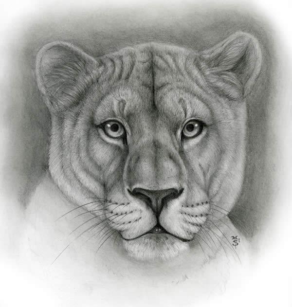 Lioness-Animal Symbolism