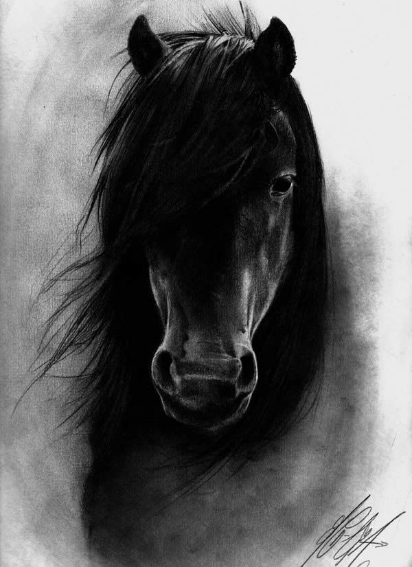 Black horse head drawing - photo#1