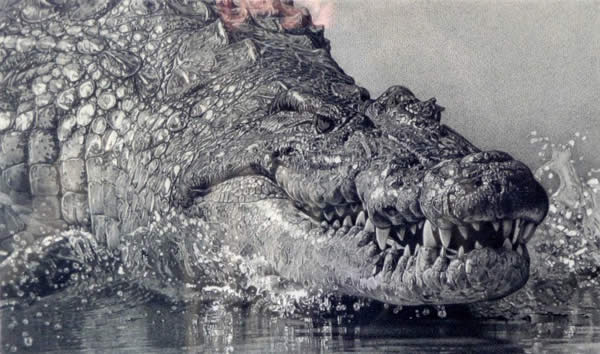 New Nile Croc Pencil Drawing