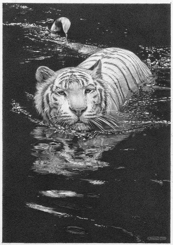 Cool Waters - White Tiger