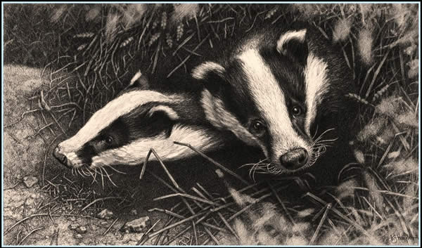 All Clear - Badgers