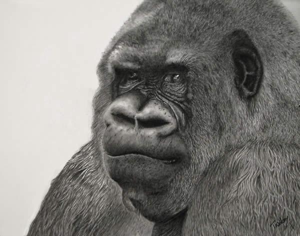 Gorilla Graphite