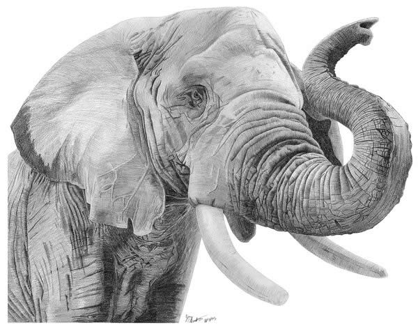 50 professional photo realistic animal drawings
