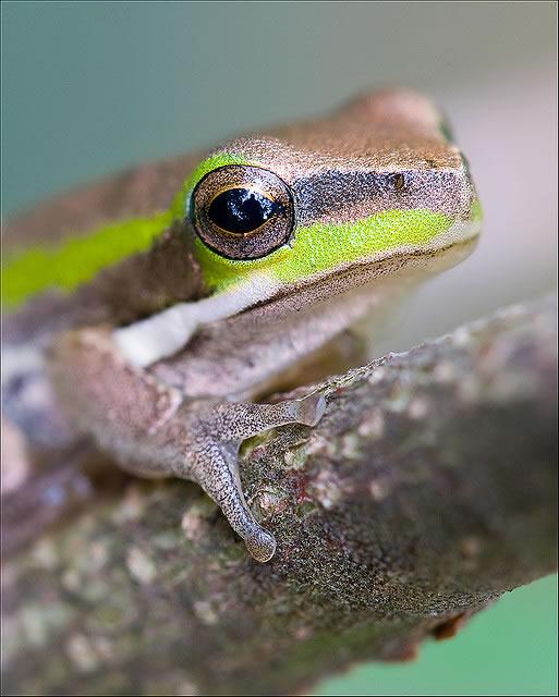 flikfrog