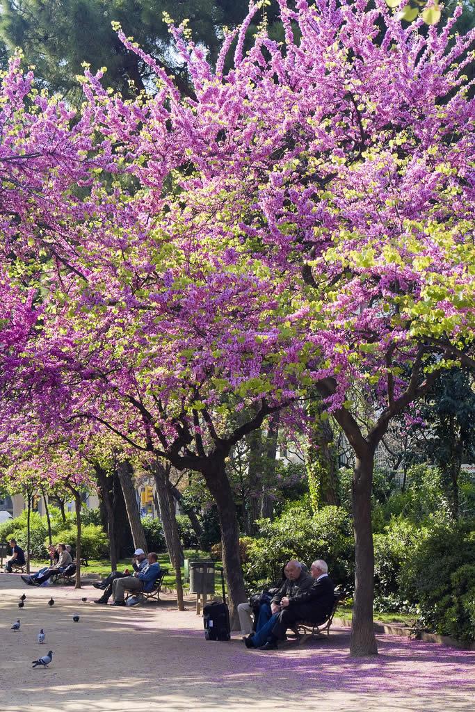 Springtime in Barcelona