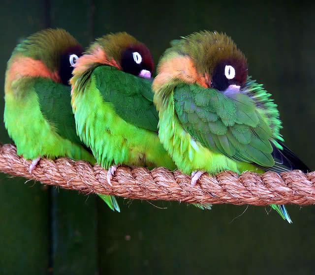 Birds - Africa Alive
