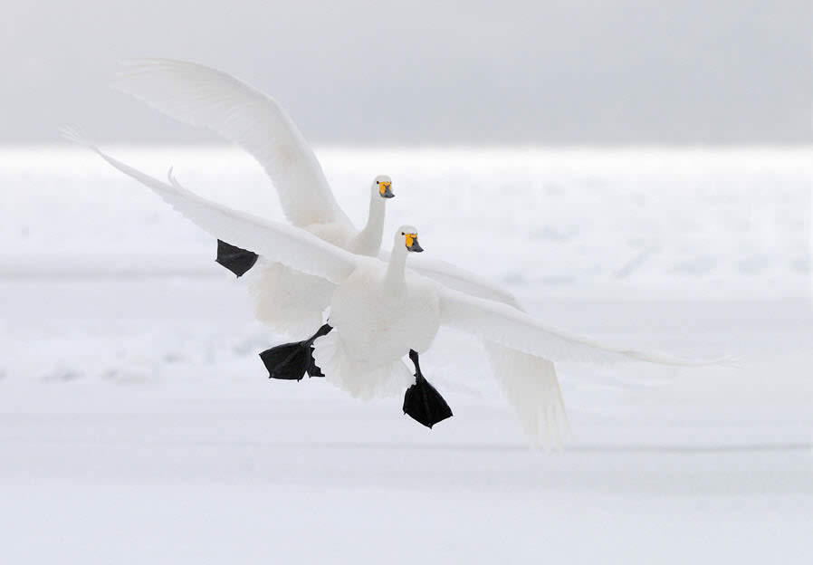 Duo Landing