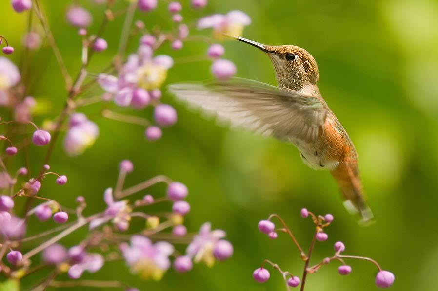 Hummming