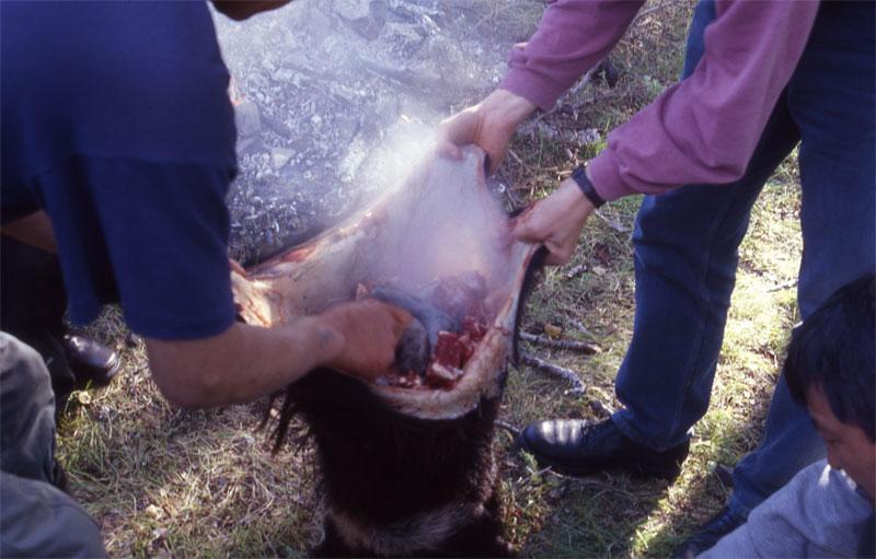 Mongolian Boodog