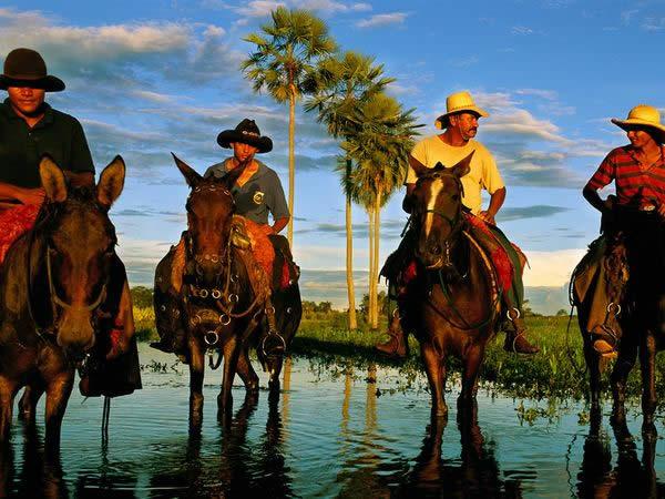 Пантанал Cowhands