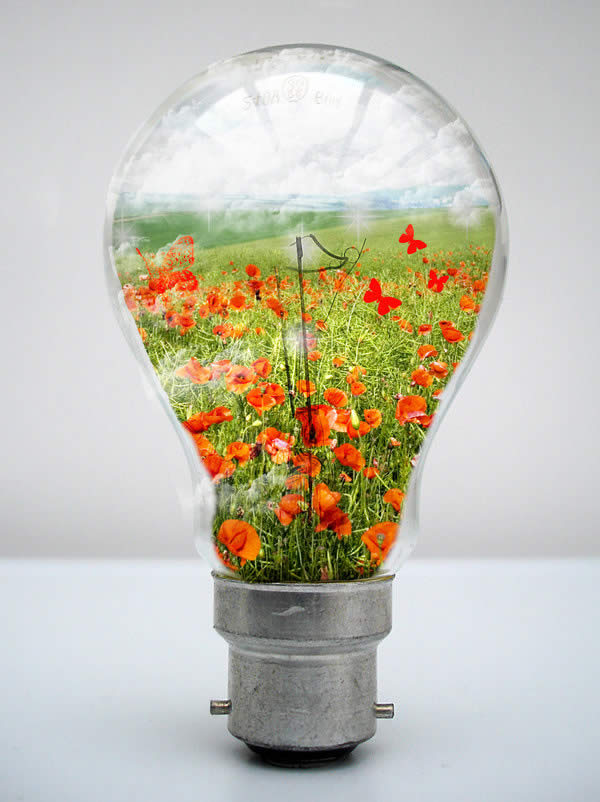 My World in a Light Bulb