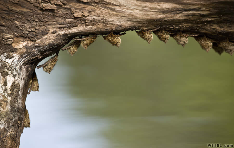 Bat Curve