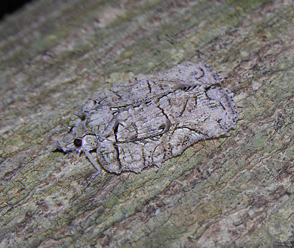Bark Hopper Camouflage