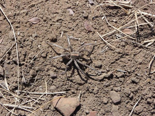 Camouflage Spider