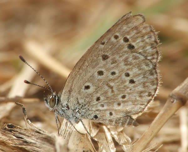 Zizeeria Knysna