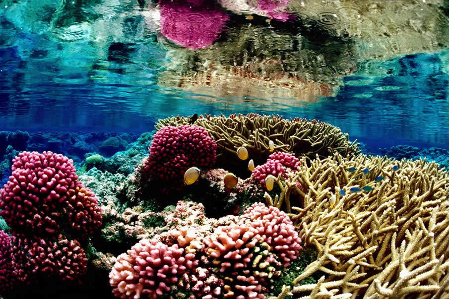 Coral Reef at Palmyra Atoll