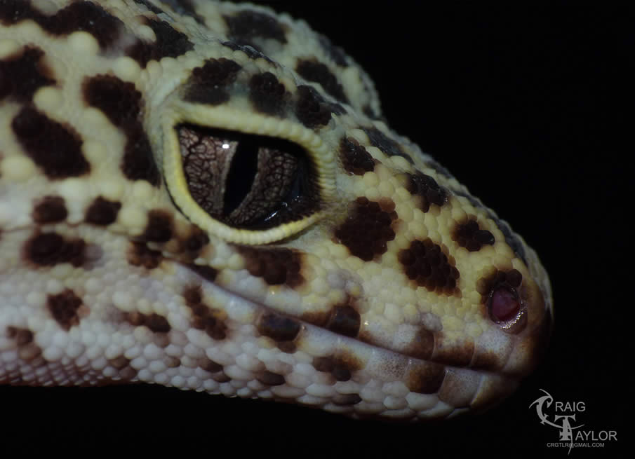 Leelo Profile