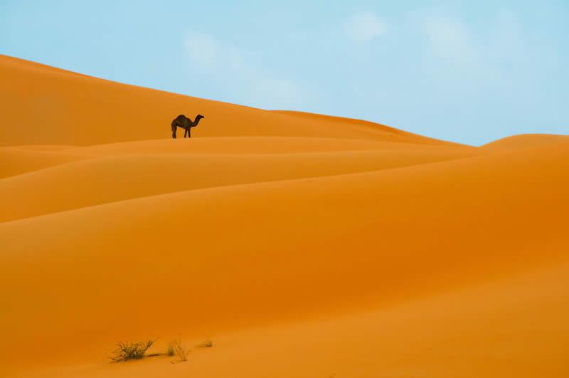 Among Sand Dunes