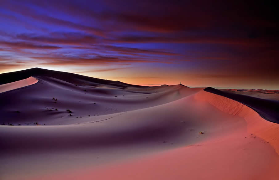 Morning in the Sahara