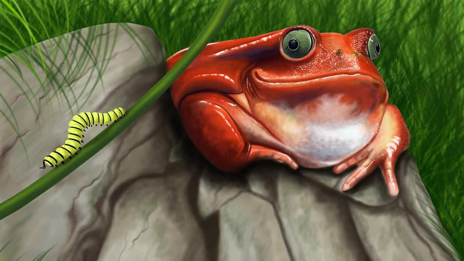 Frog Digital Painting