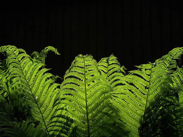Fern in sharp lighting