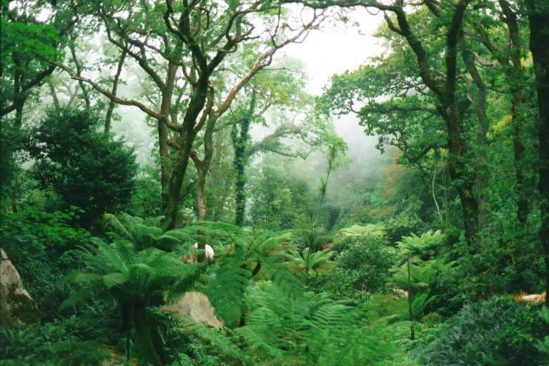 queens fern garden