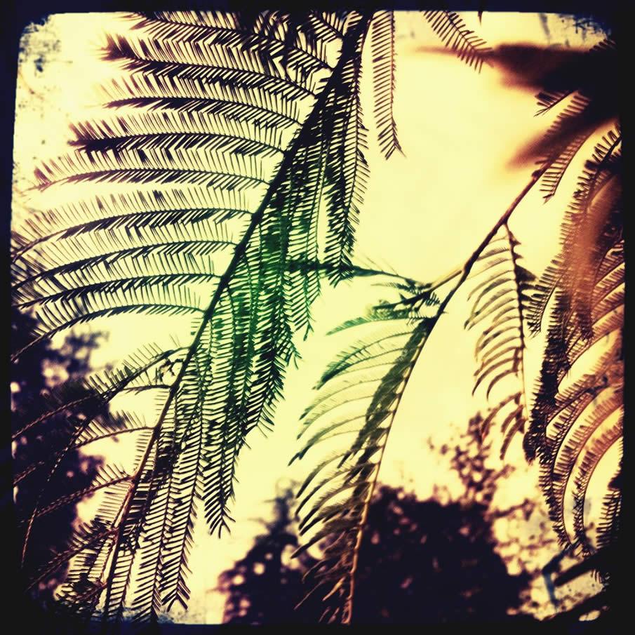 Delicate.Ferns