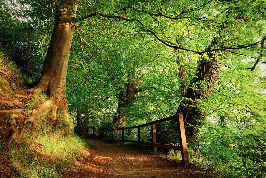 Belvoir Forest Path in Summer