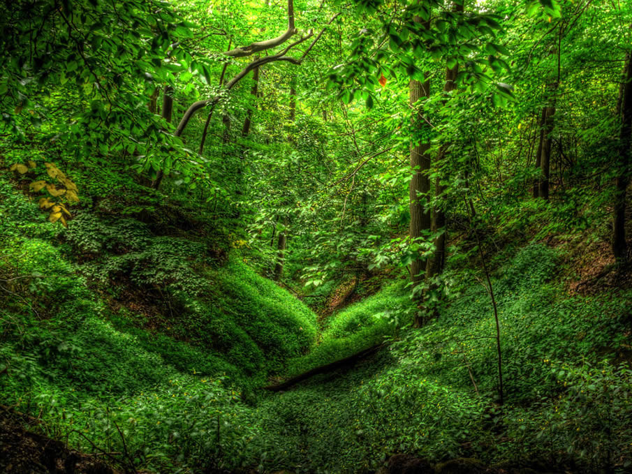 Nature sounds 48