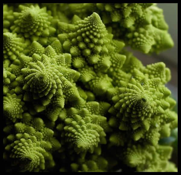 Romanesco o Broccoli Fractal