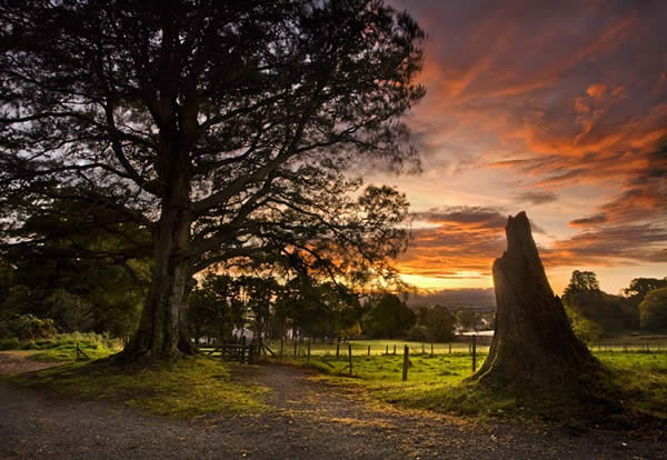 Sunrise in Derrymore Woods