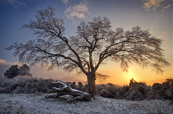 A Winters Sunset