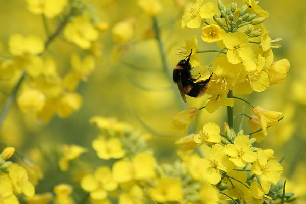 Bee on Yellow/Green